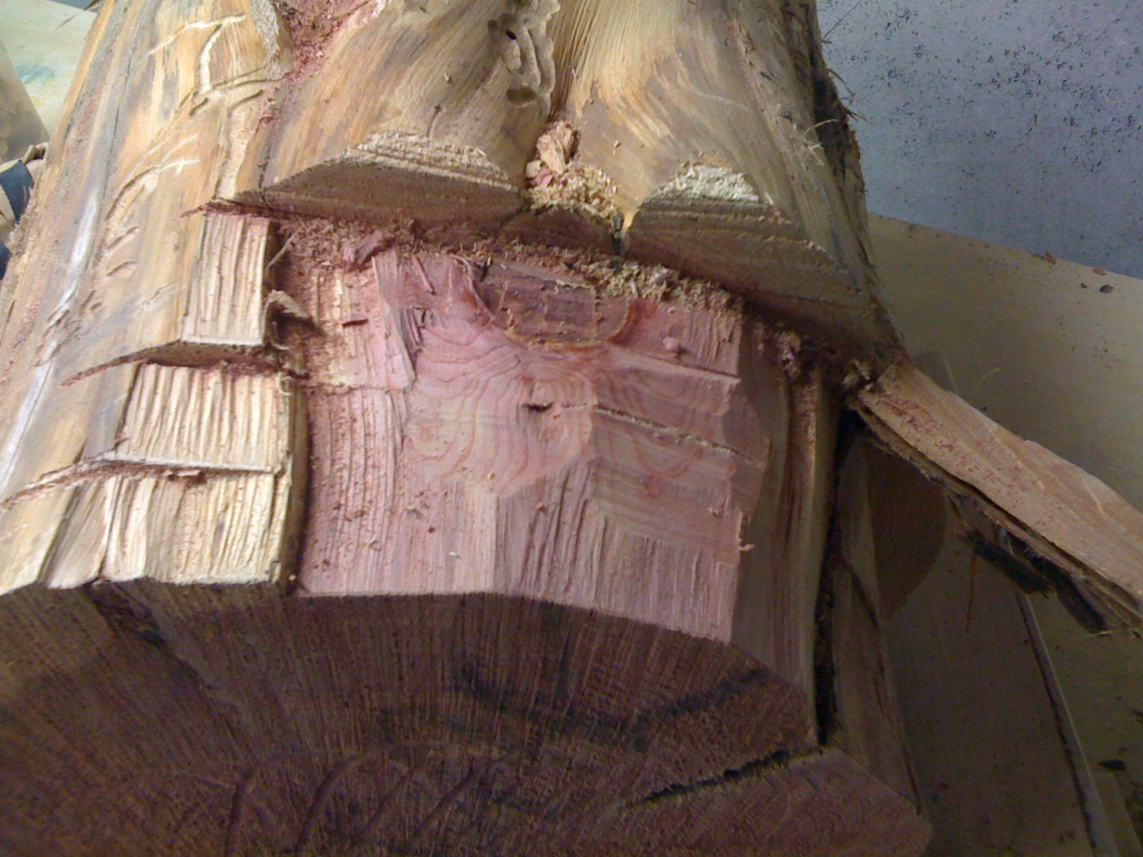 Section of cedar log