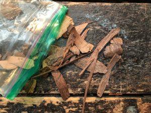 Black walnut wood scraps